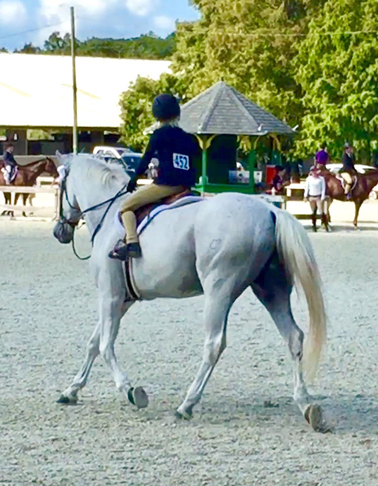 Waters Edge Stables, Professional equestrian facility, hunter/jumper specialty, full-service barn & facilities, horse boarding, riding lessons, horse shows, ribbons, competitions, shows