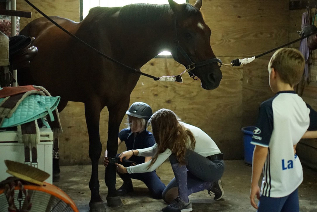 Waters Edge Stables, Professional equestrian facility, hunter/jumper specialty, full-service barn & facilities, horse boarding, riding lessons, horse shows, Facilities, Polo wraps