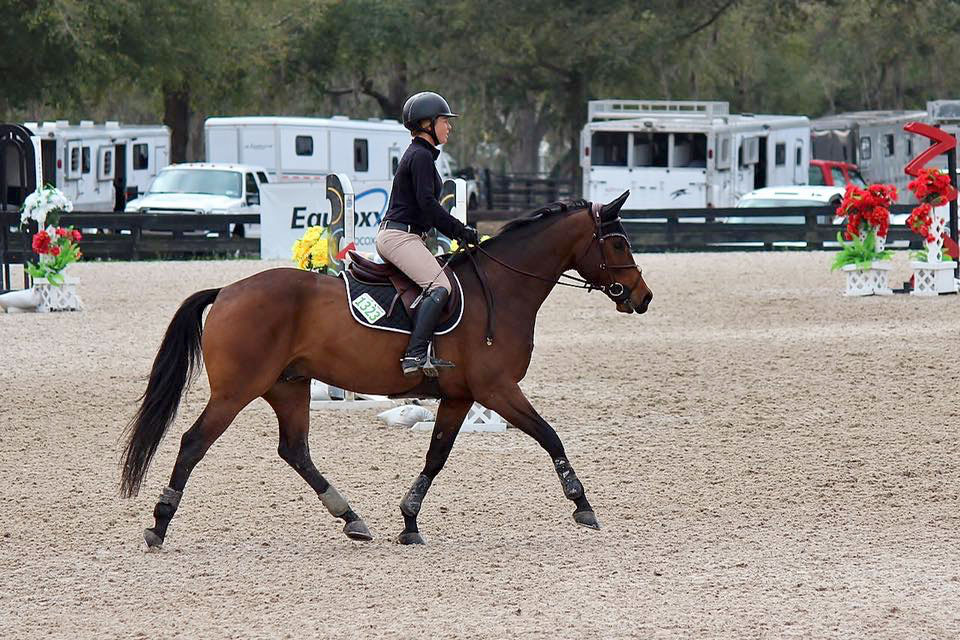 Waters Edge Stables, Professional equestrian facility, hunter/jumper specialty, full-service barn & facilities, horse boarding, riding lessons, horse shows, Jessica Cross
