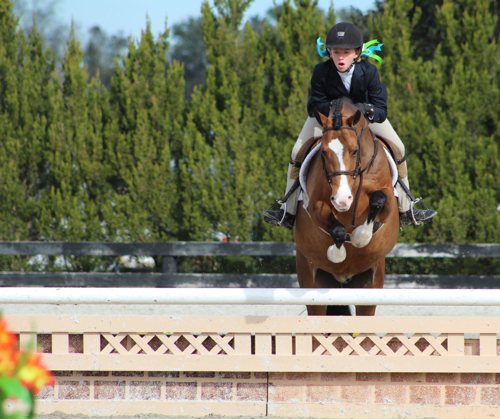 Waters Edge Stables, Professional equestrian facility, hunter/jumper specialty, full-service barn & facilities, horse boarding, riding lessons, horse shows, ribbons, youth competition